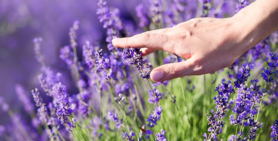 Chi Natural Life - Lavendel - Herstellend vermogen van de huid