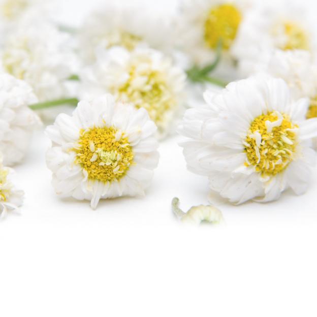 Kamille, Roomse etherische olie, Cultivar