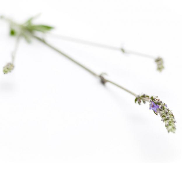 Lavendel, Spijk etherische olie, biologisch