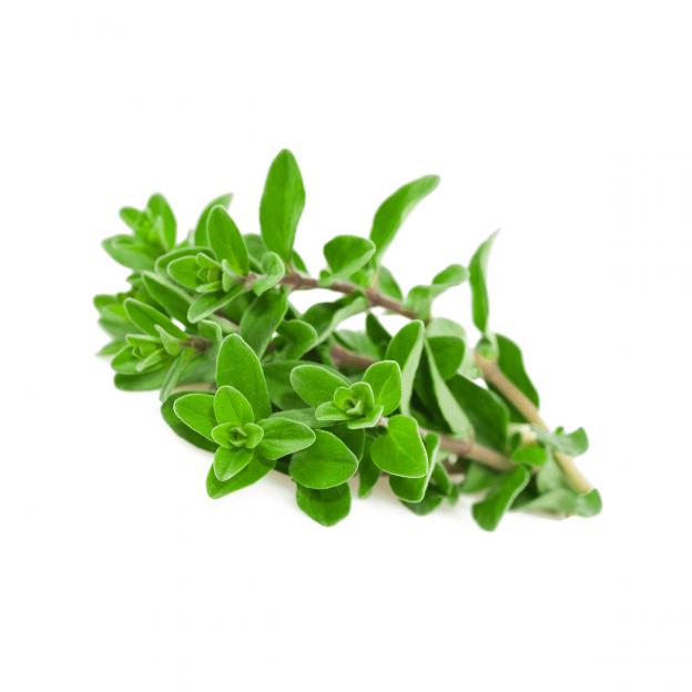 Zoete Marjolein, CO2 extract, Cultivar
