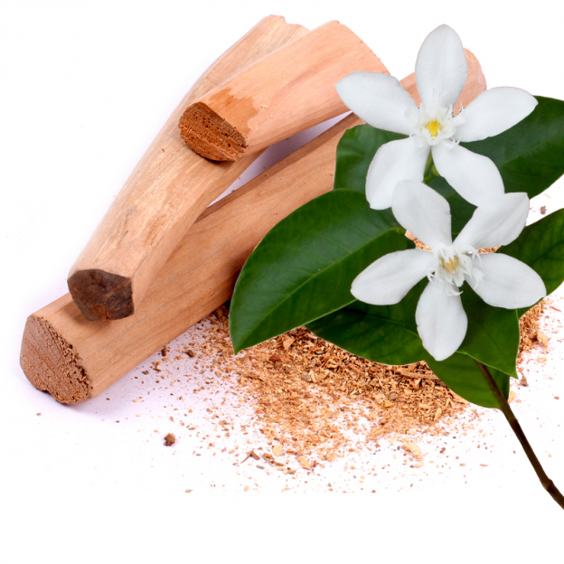 Motia Attar etherische olie, Cultivar